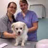 Von der Surselva in die Tierklinik