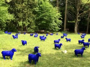 Schafe_1