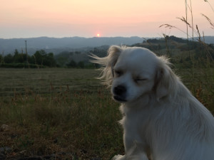 Sonnenuntrgang
