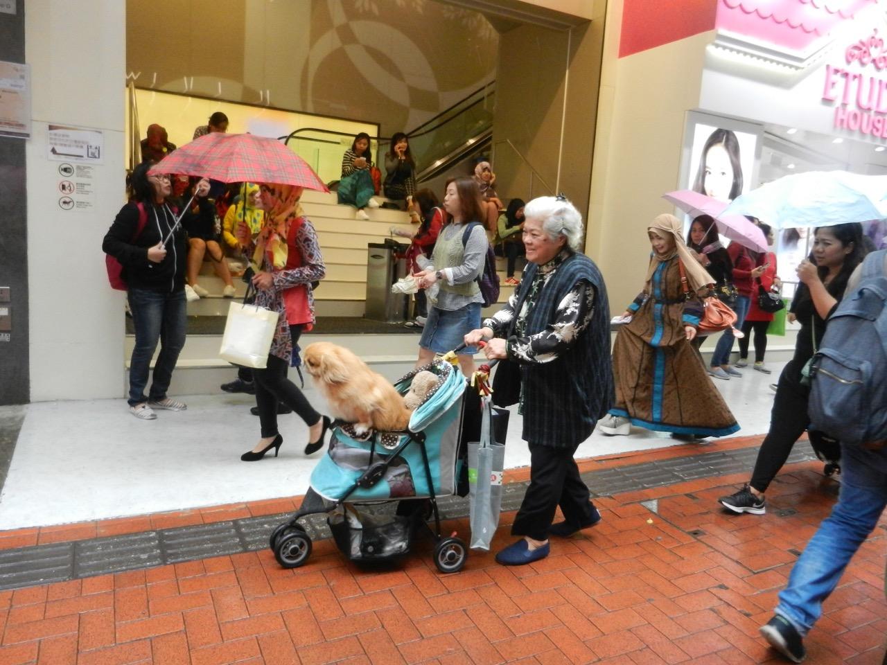 In HongKong erstaunt einen nichts. Auch nicht der putzig gestylte Hund im Wägeli mit Plüschtier. Ausser dem Chef dreht sich niemand um. In HongKong erstaunt einen nichts. Auch nicht der putzig gestylte Hund im Wägeli mit Plüschtier. Ausser dem Chef dreht sich niemand um. In HongKong erstaunt es niemanden, wenn eine Dame ihr aufgehübschtes Hündchen im Wägelchen spazierenfährt.